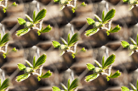 Seamless texture of the photo, endless canvas, pattern - spring twigs with buds and small leaves, young shoots, macro 版權商用圖片
