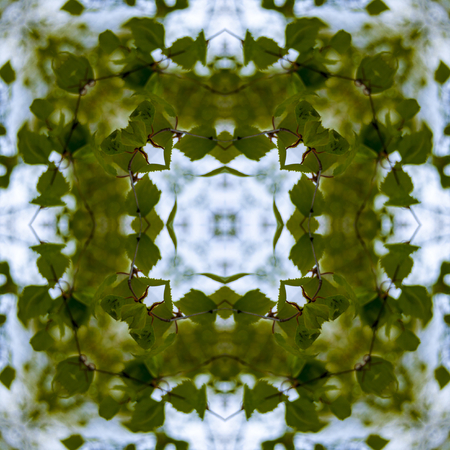 Pattern square from a photo - young leaves of a birch against the sky - a bitchy smell of warm resin, spring, coolness - defocus