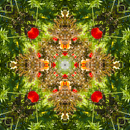 Square, kaleidoscope, a pattern from a photo of flowers growing in a flowerbed, red tulips, design Standard-Bild