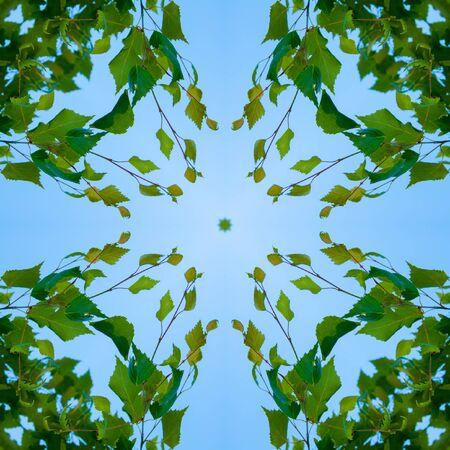 Caleidoscopio - patrón - un cuadrado de una foto. Hojas verdes frescas en el cielo azul