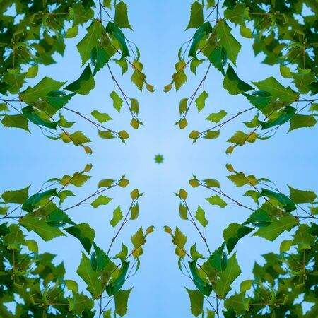 Kaleidoscope - pattern - a square from a photo. Fresh green leaves on blue sky