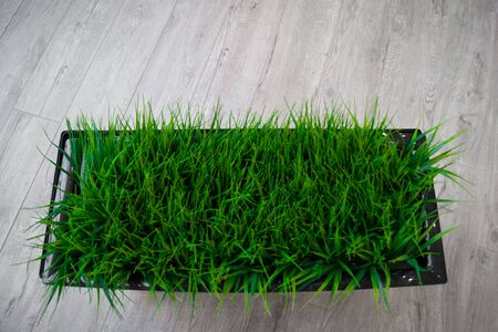 An element of interior design - a rectangular flower pot with live grass stands on the floor. Green, plants