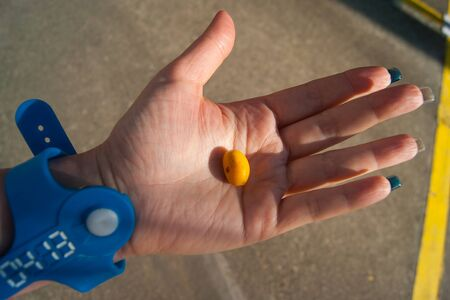 Orange palm fruits - Canary date palm. Date on a female palm. Hand in a blue bracelet from the water park. Stok Fotoğraf