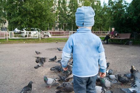 Three-year-old white boy in a blue hat, jeans and sandals on a cool summer day enthusiastically feeds gray pigeons. The kid stands with his back to the viewer