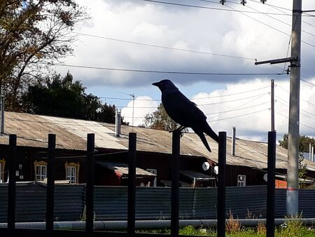 Horizontal color photo in backlight - a bird sits on a fence. Silhouette. Symbols and signs. Bird to the news. Bad news