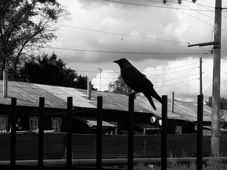Horizontal black and white photo in backlight - a bird sits on a fence. Silhouette. Symbols and signs. Bird to the news. Bad news Stok Fotoğraf