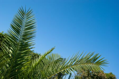 Palm tree leaves on of blue clear sky Stok Fotoğraf