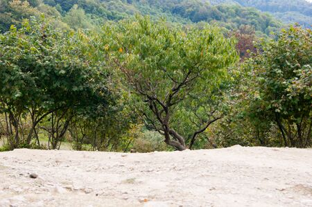 Mountain landscape - horizontal photo. Fruit trees on the slope of the mountain against the background of the mountain landscape. In the foreground is poor rocky, infertile dry soil