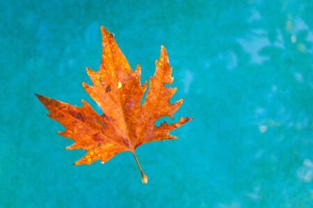 A beautiful orange leaf swims in clear turquoise water. Contrast. Autumn. Фото со стока