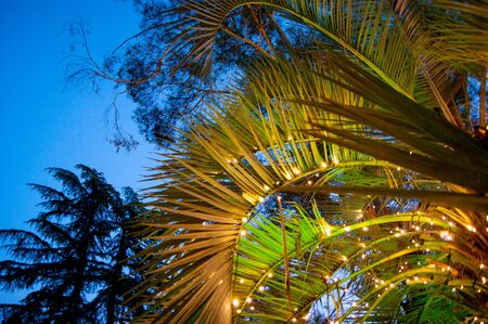 Palm leaves decorated with garlands of luminous lights against the sky on a warm southern night. Horizontal photo