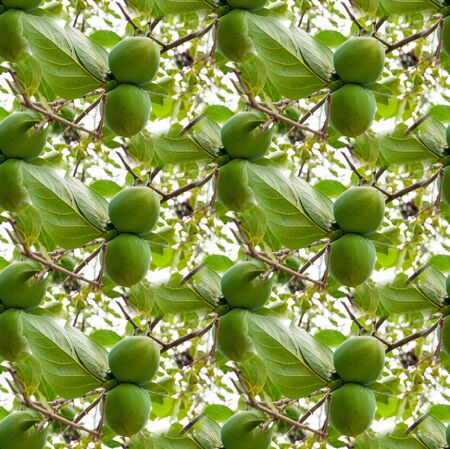 A seamless texture, an endless pattern from the photo - a garden with the fruits of green persimmon. Background for site, blog or application, textiles, wallpaper, packaging. Green summer fruit fertility