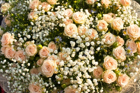 Big bouquet of roses isolated photo