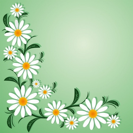 Floral border with with Chamomiles.  Vector