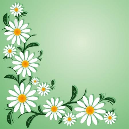 bordure floral: La fronti�re florale avec des Chamomiles.