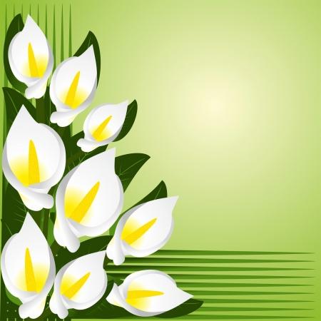 greener: Flower border with calla lilies Illustration