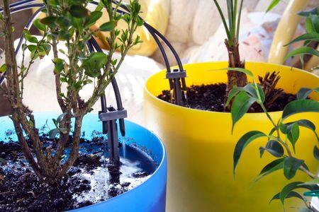 Micro Irrigation System voor huisplanten Watergift in proces Stockfoto