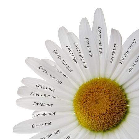 loves: Loves Me or Not Chamomile Romantic Concept