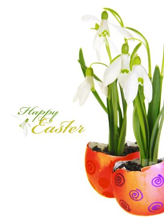 Easter Greeting Snowdrop Flowers in Egg Shells Stock Photo