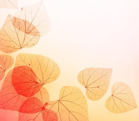 Bloemen Grens met Herfst Oranje en rode bladeren