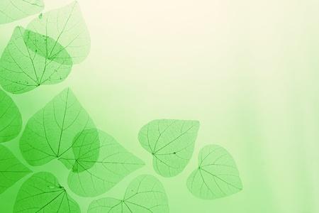 Bloemenrand van groene bladeren op gele achtergrond