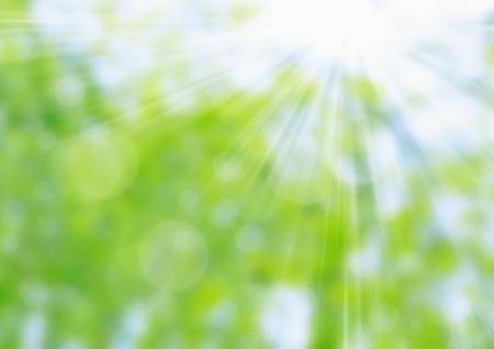 dia soleado: Resumen de la primavera naturaleza fondo verde y azul Bokeh
