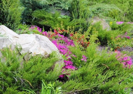 Coniferous Plants Garden Part Designed with Stone Stock Photo