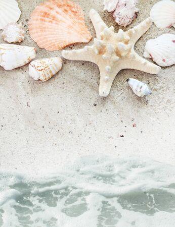 siervo: Playa de mar con conchas ba�adas por frontera de siervos