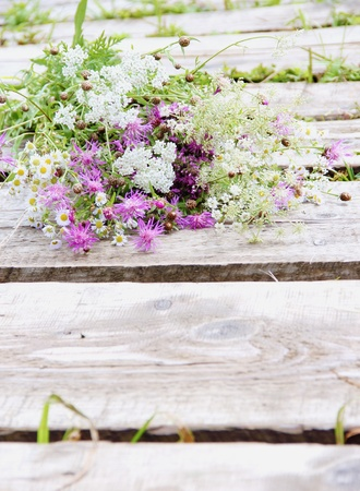 curative: Curative Blooming Herbs and Flowers over Wood