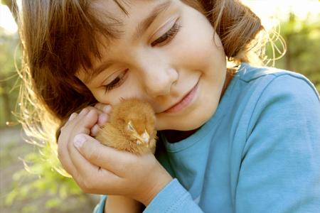 animalitos tiernos: Ternura Tierno que sostiene el pollo en las manos como un tesoro Foto de archivo