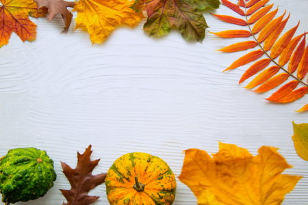 Bright autumn leaves and different kinds of little pumpkins on white background. Free space fore text, for greetings. Thaksgiving day concept.