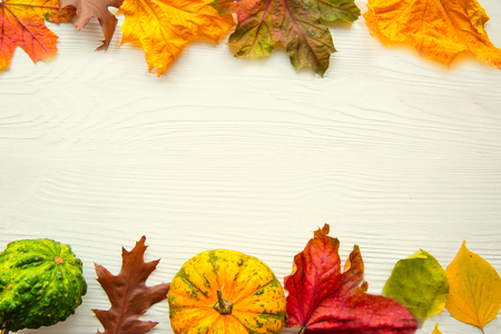 Bright autumn colors backgrounds, space for text, thanksgiving day concept. Dried leaves and squash.