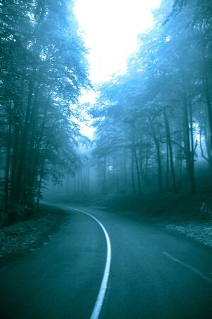 Foggy road in the misty fairytale dark forest, scary halloween concept.