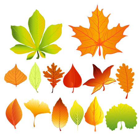 Vector illustration set of colorful and bright autumn leaves different colors and shapes in flat cartoon style. Red, green and yellow leaves.