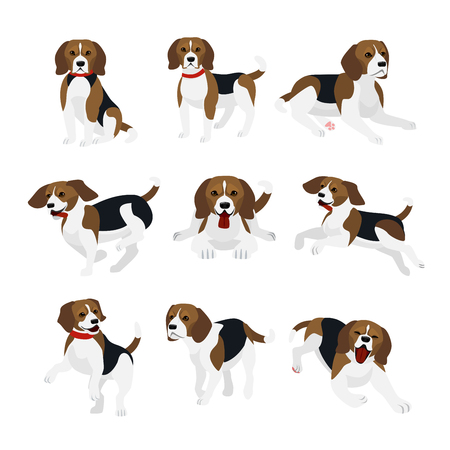 Vector illustration set of cute and funny beagle dog