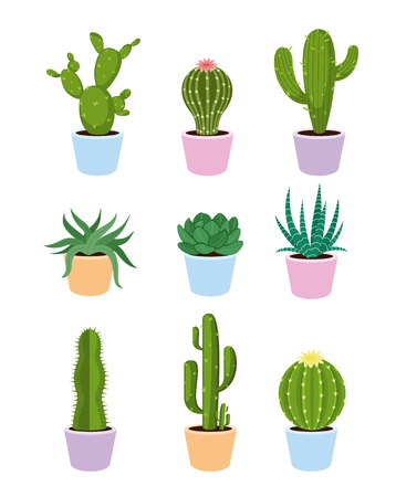 A Vector illustration set of succulents and cactus with flowers on white background in flat style.