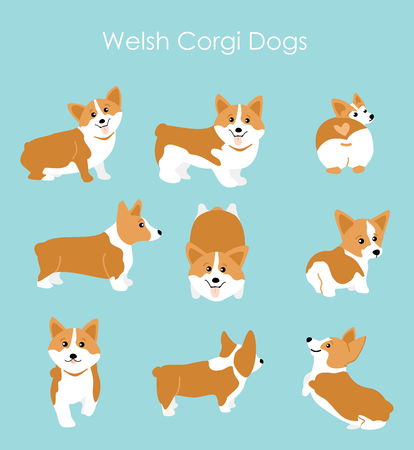 Vector illustration of cute and happy welsh corgi set in different poses. Funny corgi for decoration and design in flat cartoon style.
