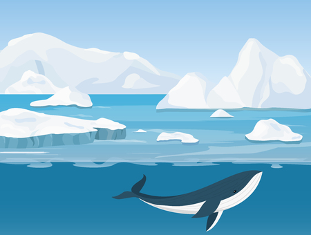 Vector illustration of beautiful arctic landscape of northern and Antarctic life. Icebergs in ocean and underwater world with whale in flat cartoon style.