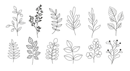 Vector illustration set of branches, leaves, twigs, garden grasses in line style Standard-Bild - 100287568