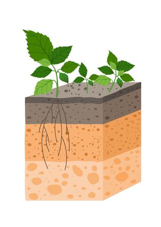 Perfil de suelo de ilustración vectorial con planta, raza de horizontes de suelo. Pedazo de tierra con planta y raíces en estilo plano. Ilustración de vector