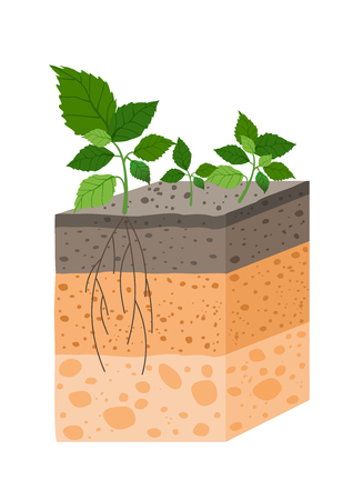 Vector illustration soil profile with plant, breed of soil horizons. Piece of land with plant and roots in flat style.