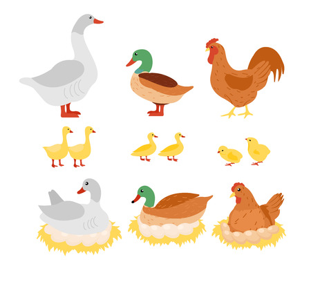 Vector illustration set of poultry, chicken, hen, cock and duck, goose on the nest with eggs in flat cartoon design. Stock Illustratie