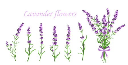 Vector illustration of lavender flower on different shape branches on white background. Vintage France provence concept in retro style. Pattern elements for romantic greeting cards and invintations in flat style