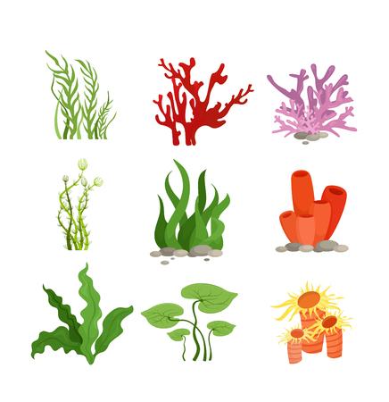 Ensemble d'illustration vectorielle de plantes aquatiques colorées et corail isolé sur fond blanc dans un style plat de dessin animé