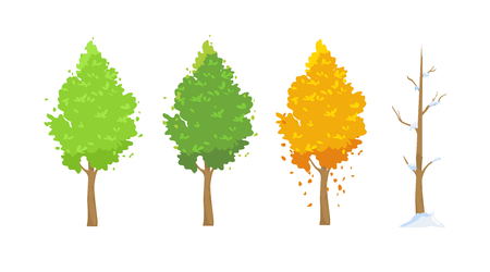 Vector illustration of tree in different seasons. Green in spring and summer, red in autumn, winter tree with snow in flat cartoon style on white background