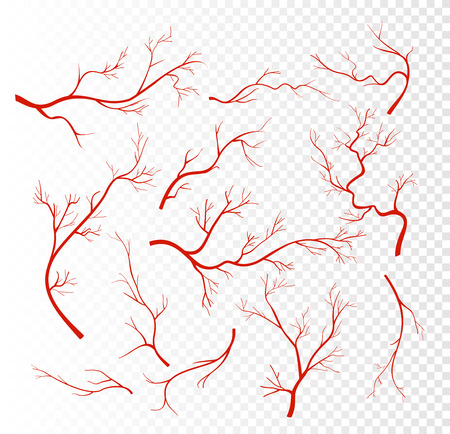 Vector illustration set of red human veins, capillaries or vessel, blood arteries isolated on transparent background.