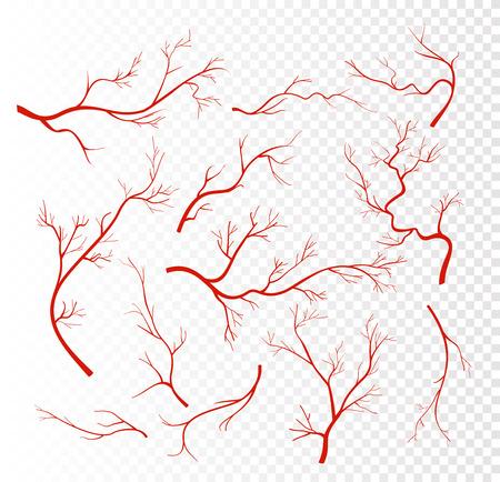 Vektorillustrationssatz rote menschliche Venen, Kapillaren oder Gefäße, Blutarterien einzeln auf transparentem Hintergrund. Vektorgrafik