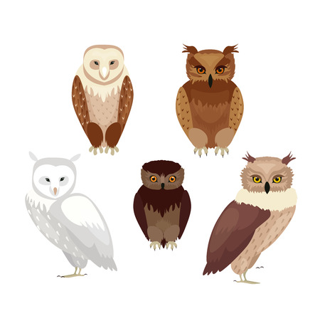 Vector illustration of realistic owls set. Collection of owls in realistic style, vector collection isolated on white background Иллюстрация