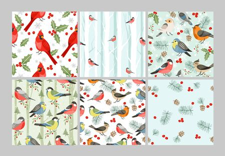 Winter birds vector seamless patterns set. Cold season songbirds cartoon illustrations. Red cardinal, Christmas symbol with mistletoe leaves and berries. Decorative Xmas time wrapping paper design