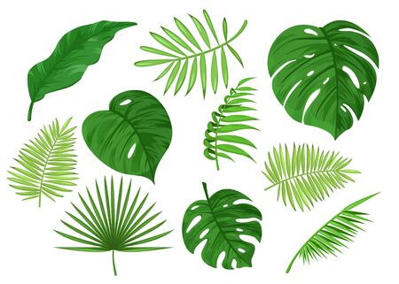 Tropical carved and solid apart leaves cartoon vector illustration set isolated on white background. Collection of light, dark green exotic items. Wallpaper, wall art, banner, poster, decoration Ilustración de vector
