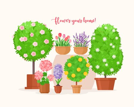 Home garden vector illustration. Cartoon flat green tropical fruit tree and organic house plant in pot, lavender or tulip flower in planter flowerpot, balcony and home decor interior isolated on white